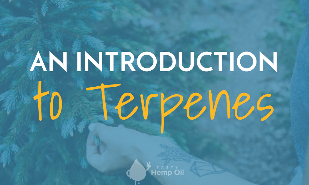 an introduction to terpenes